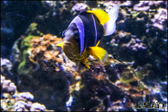 Aquarium photos 7 l