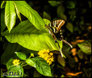 Butterflies photos 1