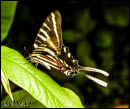 Butterflies photos 4