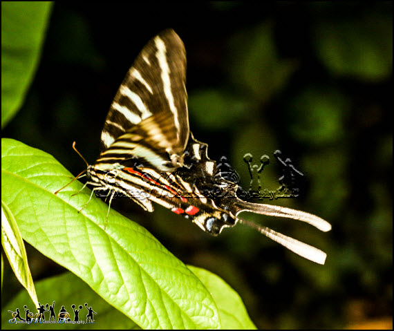 Butterflies photos 4 l