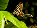 Butterflies photos 5