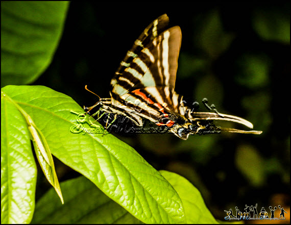 Butterflies photos 5 l