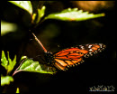 Butterflies photos 2