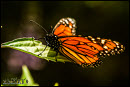 Butterflies photos 7
