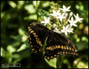 Butterflies photos 3